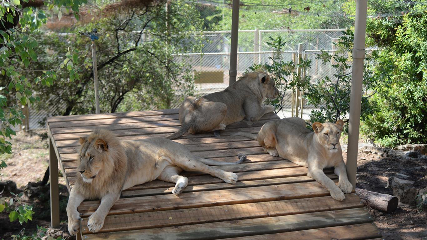 حديقة-حيوان-أنطاليا